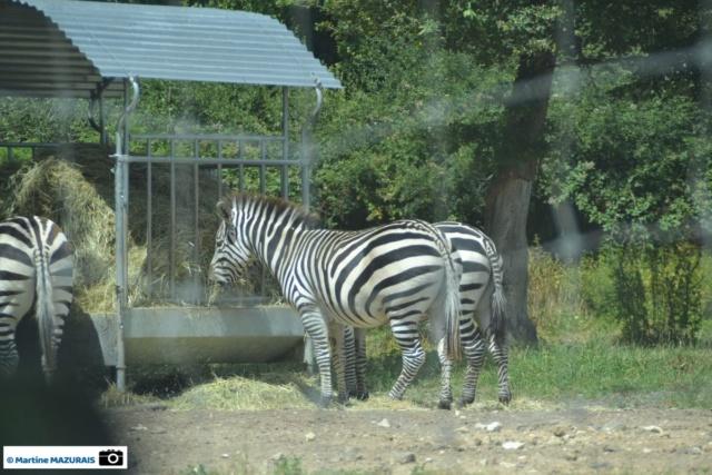 Obterre - Réserve zoologique de la Haute-Touche Dsc_0228