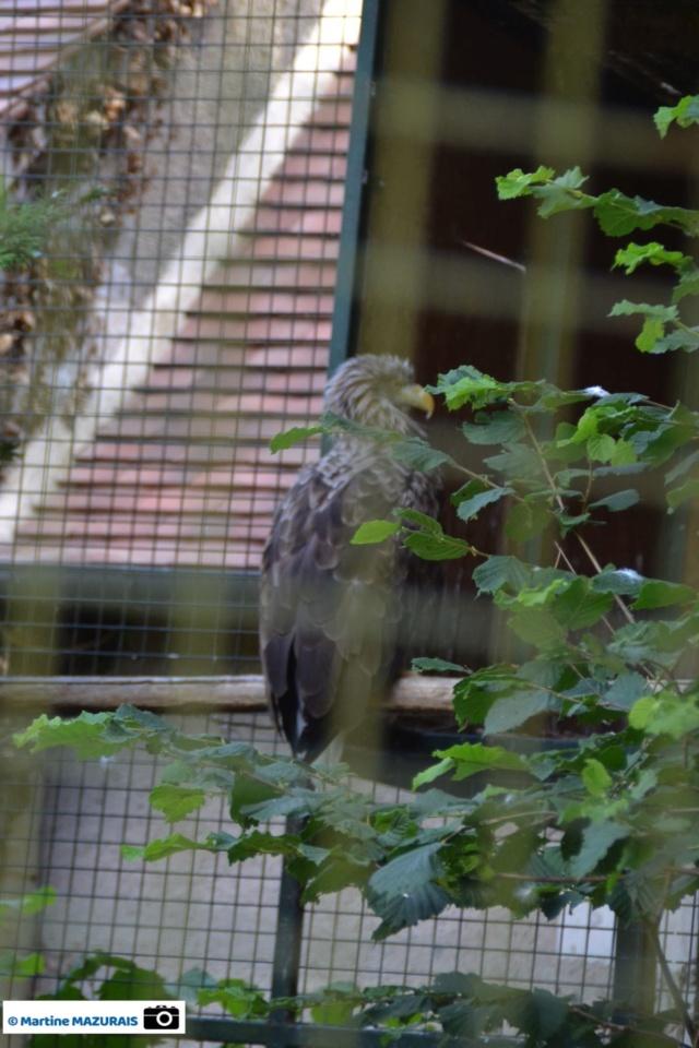 Obterre - Réserve zoologique de la Haute-Touche Dsc_0230