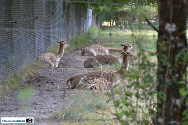 Obterre - Réserve zoologique de la Haute-Touche Dsc_0232