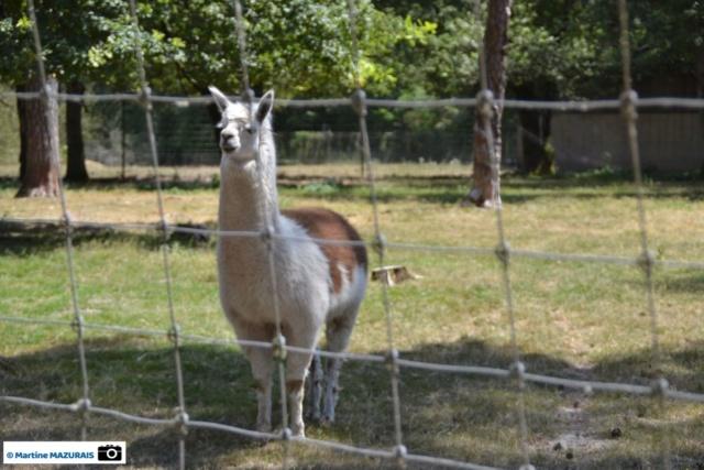 Obterre - Réserve zoologique de la Haute-Touche Dsc_0237
