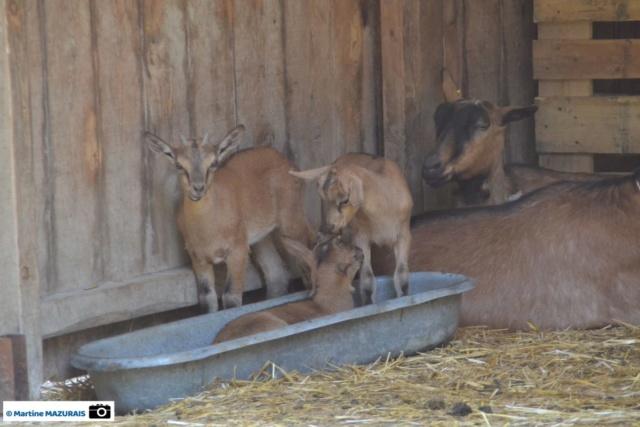 Obterre - Réserve zoologique de la Haute-Touche Dsc_0238