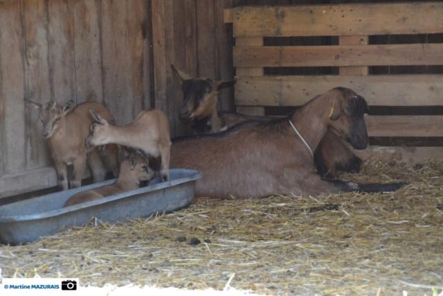 Obterre - Réserve zoologique de la Haute-Touche Dsc_0239
