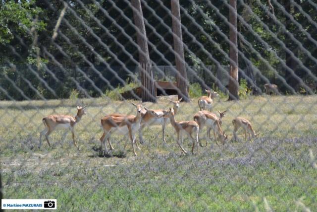 Obterre - Réserve zoologique de la Haute-Touche Dsc_0242