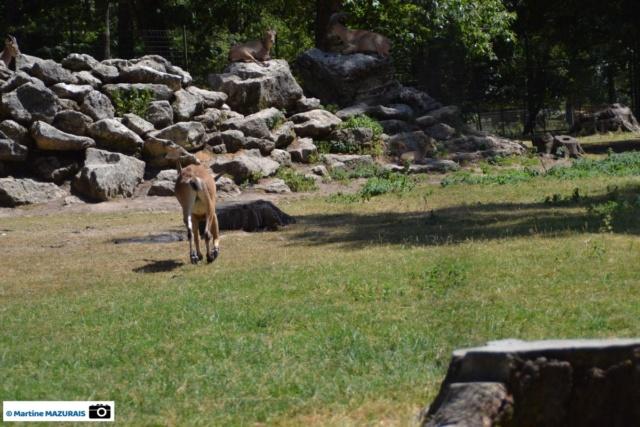 Obterre - Réserve zoologique de la Haute-Touche Dsc_0243