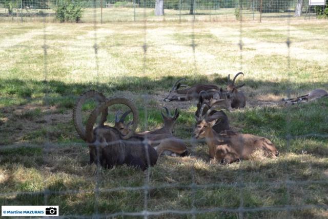Obterre - Réserve zoologique de la Haute-Touche Dsc_0245