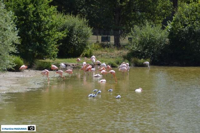 Obterre - Réserve zoologique de la Haute-Touche Dsc_0246