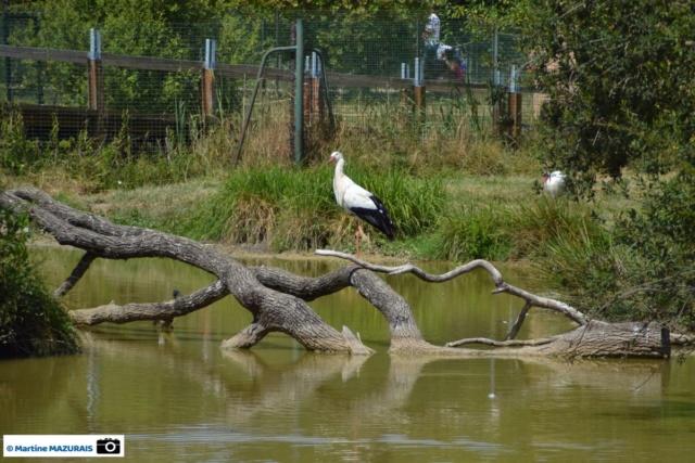Obterre - Réserve zoologique de la Haute-Touche Dsc_0248
