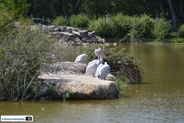 Obterre - Réserve zoologique de la Haute-Touche Dsc_0250