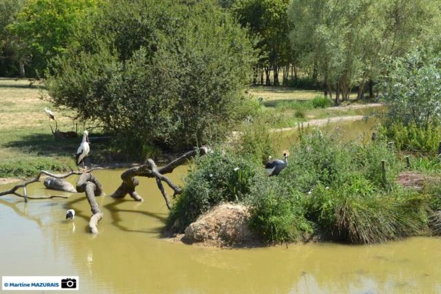 Obterre - Réserve zoologique de la Haute-Touche Dsc_0251