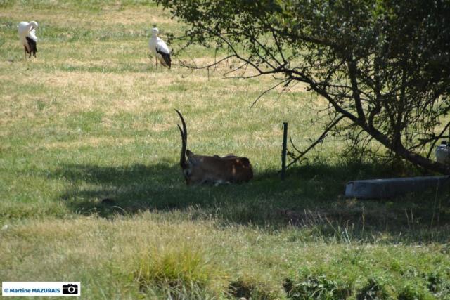 Obterre - Réserve zoologique de la Haute-Touche Dsc_0252