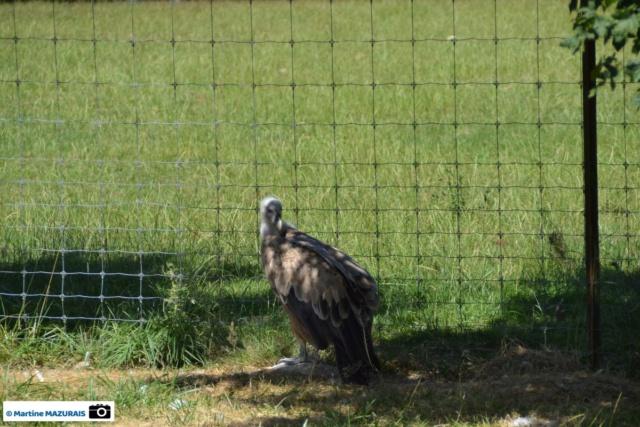 Obterre - Réserve zoologique de la Haute-Touche Dsc_0254
