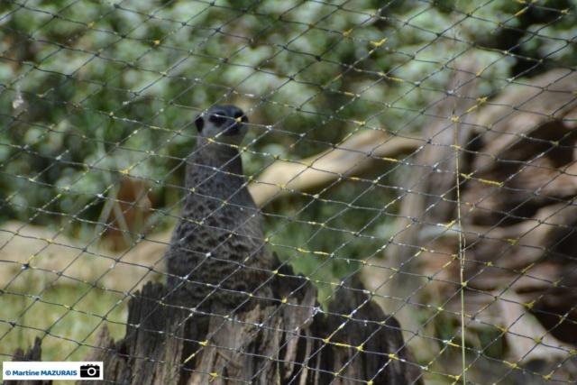 Obterre - Réserve zoologique de la Haute-Touche Dsc_0256