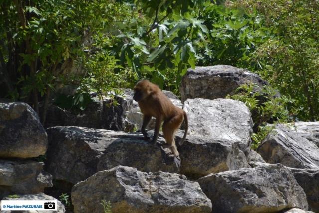 Obterre - Réserve zoologique de la Haute-Touche Dsc_0259