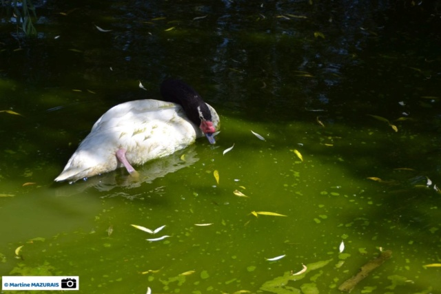Obterre - Réserve zoologique de la Haute-Touche Dsc_0261