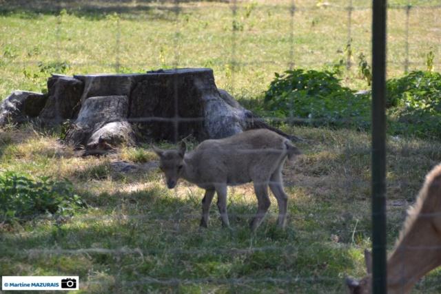 Obterre - Réserve zoologique de la Haute-Touche Dsc_0262