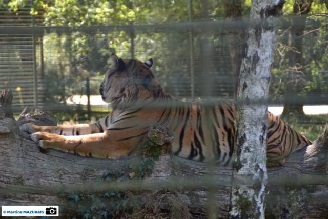Obterre - Réserve zoologique de la Haute-Touche Dsc_0264