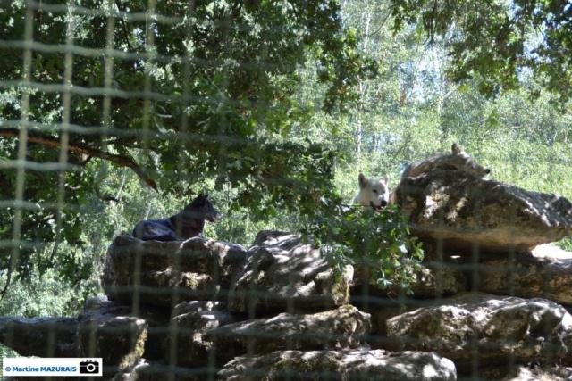 Obterre - Réserve zoologique de la Haute-Touche Dsc_0265