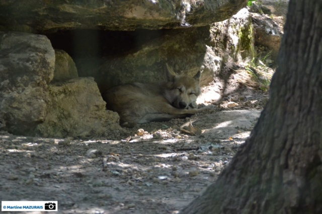 Obterre - Réserve zoologique de la Haute-Touche Dsc_0268