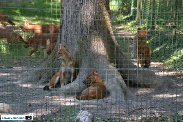 Obterre - Réserve zoologique de la Haute-Touche Dsc_0271