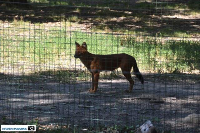 Obterre - Réserve zoologique de la Haute-Touche Dsc_0272