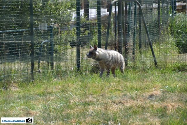 Obterre - Réserve zoologique de la Haute-Touche Dsc_0273