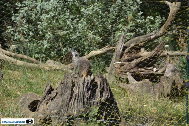 Obterre - Réserve zoologique de la Haute-Touche Dsc_0274