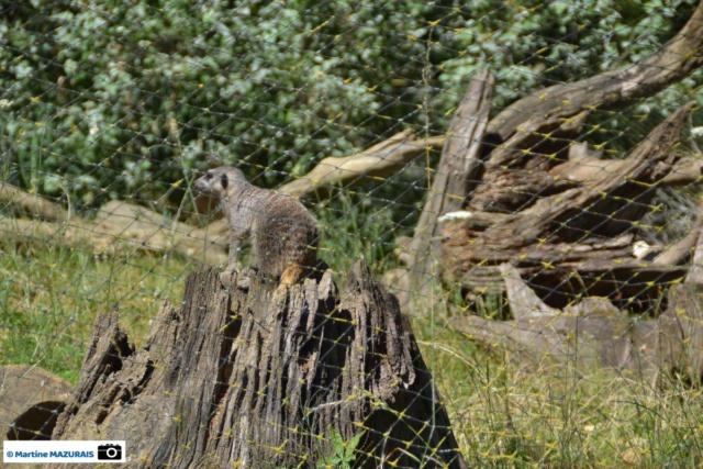 Obterre - Réserve zoologique de la Haute-Touche Dsc_0275