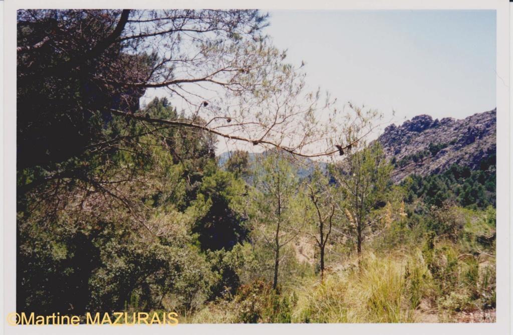 Le Mont Galatzo Le_mon13