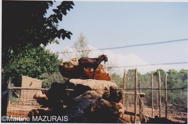 Santa Eugénia - Natura Parc Santa_11