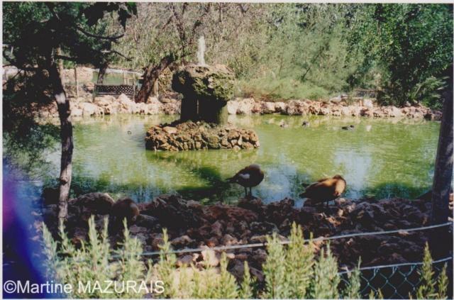 Santa Eugénia - Natura Parc Santa_18