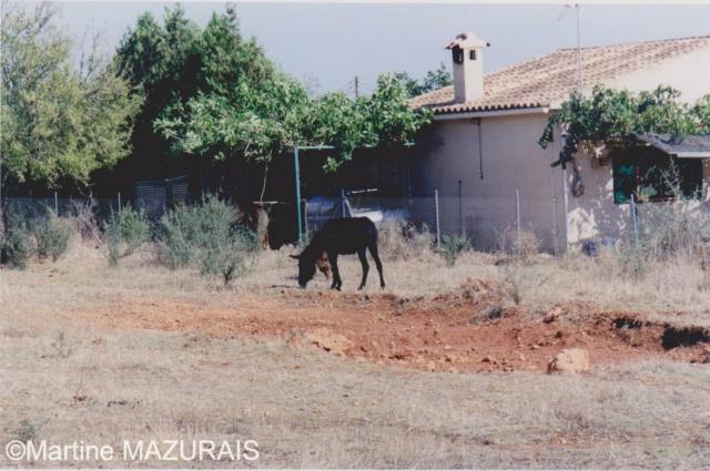 Santa Eugénia - Natura Parc Santa_19