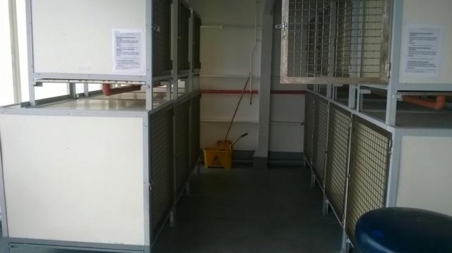 Traversée en ferry Barcelone-Alcudia avec chiens Wp_20112
