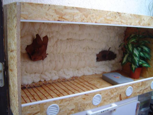 Construction d'un terrarium pour Boa constrictor imperator Dsc01424