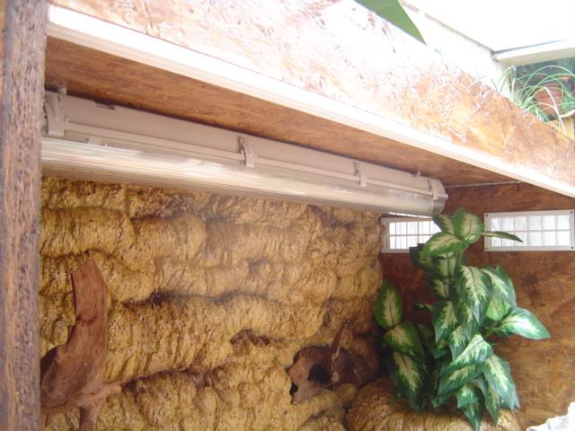 Construction d'un terrarium pour Boa constrictor imperator Dsc01428