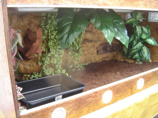 Construction d'un terrarium pour Boa constrictor imperator Dsc01434