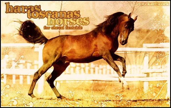 [| Haras Toscana Horse's  |]
