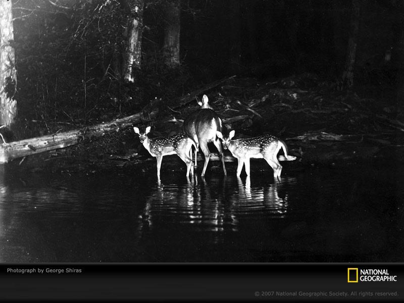 FOTOS ESPECTACULARES DE TODO EL MUNDO - Página 7 Deer-a10