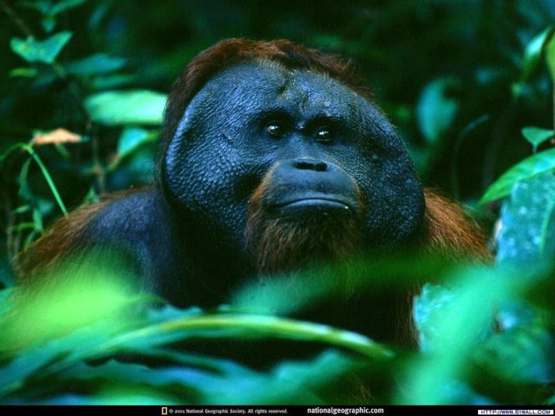 FOTOS ESPECTACULARES DE TODO EL MUNDO Gorila10