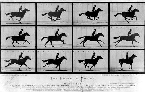 FOTOS ESPECTACULARES DE TODO EL MUNDO - Página 7 Horse-10