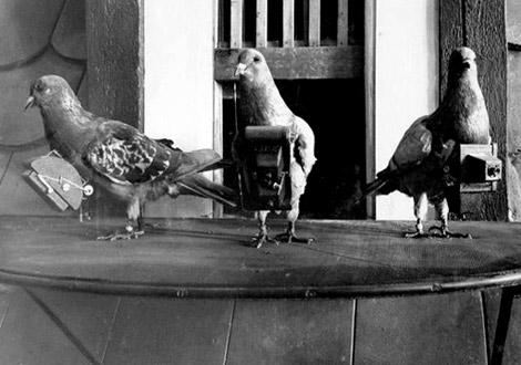 FOTOS ESPECTACULARES DE TODO EL MUNDO - Página 7 Pigeon10