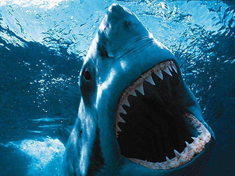 FOTOS ESPECTACULARES DE TODO EL MUNDO - Página 3 Tiburo10