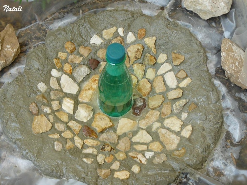 bassin pour tortue d eau 710