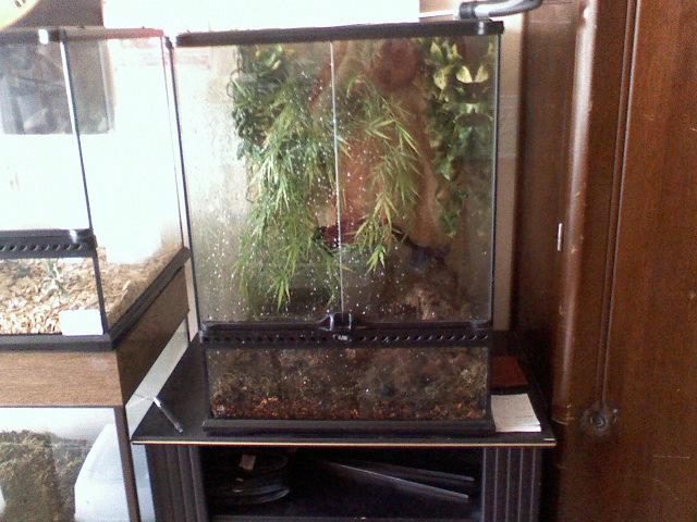 J'ais enfin fini mon terrarium naturel... 08120810