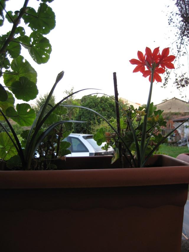 Agosto en flor - Página 3 Img_1414