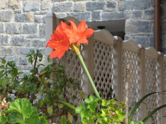 Agosto en flor - Página 3 Img_1415