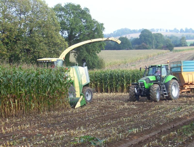 Ensilage de maïs 100_1314