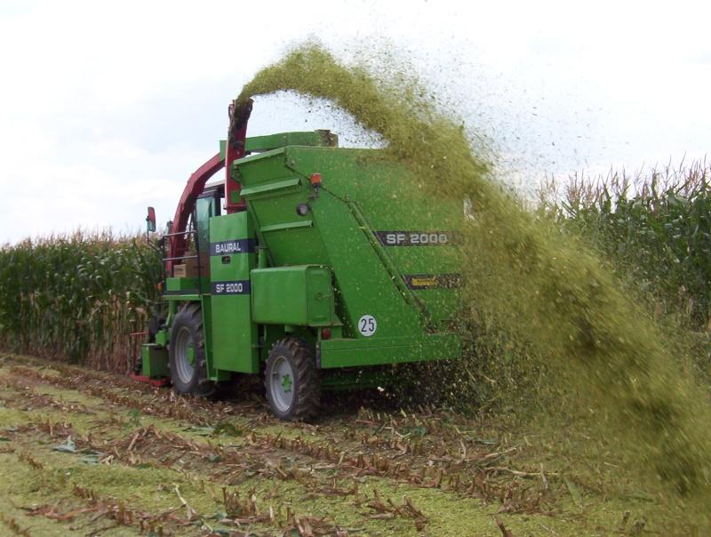 Ensilage de maïs 100_2011
