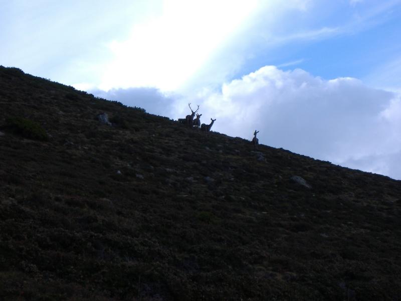 Fotos de los montes CANTABROS Julio-17