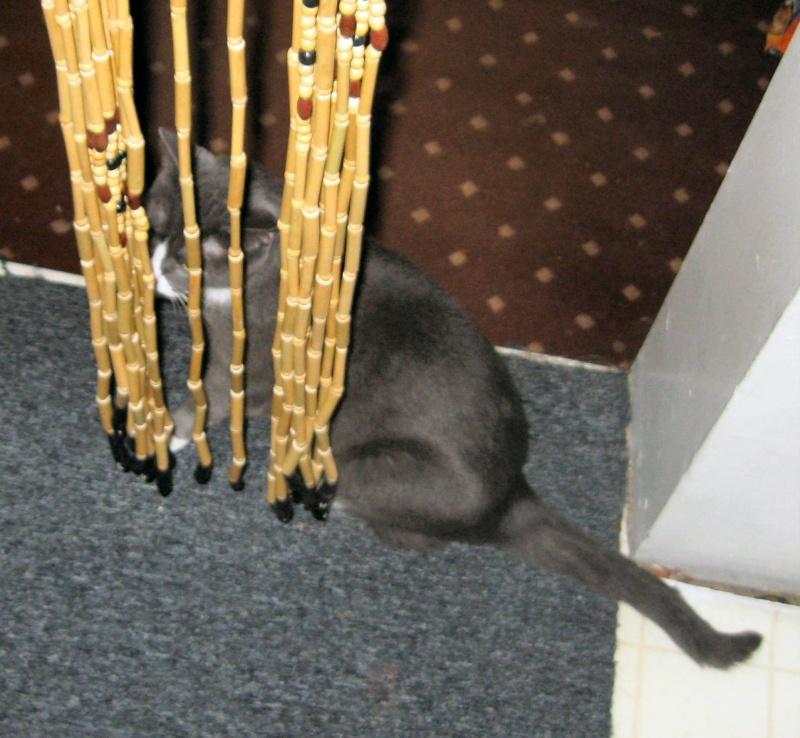 Fox's kitty cat Tiffa Img_0415