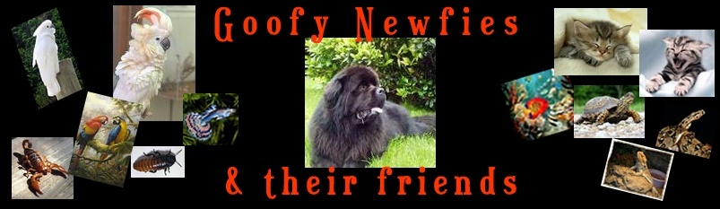 Goofy Newfies & Friends